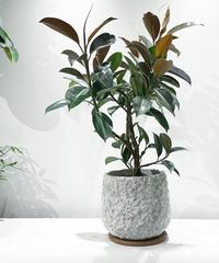 【観葉植物】フィカス・メラニー / flower relief pot