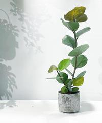 【観葉植物】シーグレープ  /  ancient sylinder pot