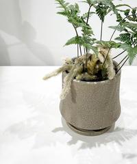 【観葉植物】トキワシノブ / crackskin pot beige