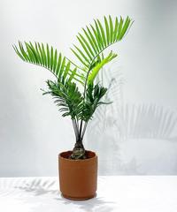 【観葉植物】ザミアフロリダーナ / ungrazed pot (鉢カバー)