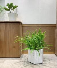 【観葉植物】タマシダ ヘキサホワイトテラゾポット