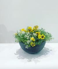 屋外植物 パンジーとアリッサムの寄せ植え アートストーンのポット