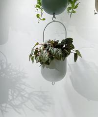 【観葉植物】ペペロミア ペッパーミル /  ハンギングポットホワイト