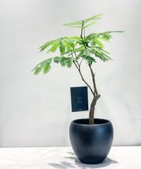【観葉植物】エバフレッシュ
