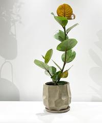 【観葉植物 】シーグレープ  / ROCK POT  L    beige