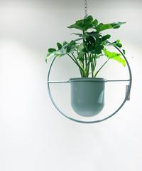 【観葉植物 】フィロデンドロンセローム  / サークルハンギング グリーン