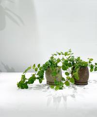 【観葉植物 】プミラグリーン/  crack skin pot  beige / brown