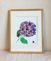 """花に聞く-""""紫陽花"""""""