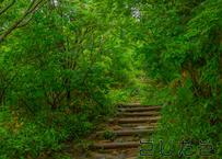 【写真】緑が青い山道