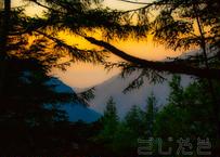 【写真】木々から覗く朝焼け
