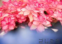 【写真】名も知らぬ綺麗な花