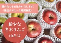 稀少な老木りんご 10キロ (品種2種類以上入ります)