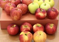 米崎りんご 10キロ (2種類バラ詰め合わせ)