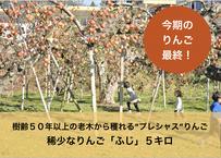 5キロ 老木りんご【ふじ:小〜中玉】