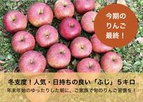 人気・日持ちのよい品種「ふじ」 5キロ