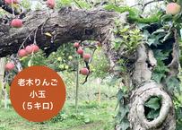 5キロ 老木りんご【ふじ:小玉】