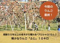 10キロ 老木りんご【ふじ:小〜中玉】