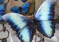 蝶のマグネット ディダミアモルフォ Turquoise XLsize