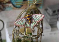 蛾のマグネット イザベラミズアオ normal 2Ssize