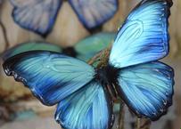 蝶のマグネット メネラウスモルフォ new turquoise.col Msize