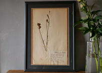 herbier no.10