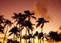 Sunset Palm Trees マット入(中)