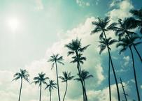 Green Palm Trees  マット入(中)