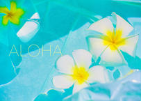 Aloha Plumeria  マット入(中)