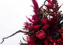 red colour flowers