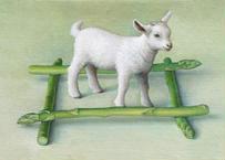 奥村 晃史「井の中の山羊」