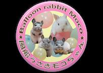 限定版  風船モコちゃんねる 缶バッチ2セット 東急ハンズ池袋店販売記念品