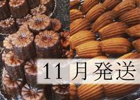 【11月発送】【早割】特別焼菓子セット