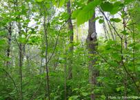 オンデマンド配信:焚き火のある鼎談会『INTO THE FOREST』(関野 吉晴&大竹 英洋)