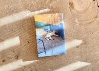 若林正恭『表参道のセレブ犬とカバーニャ要塞の野良犬』