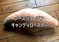 ノースジョージア キャンディロースター【かぼちゃ】