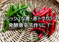 フレッシュ唐辛子 青&赤 100gずつ