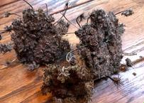 綿つき新にんじんの種 約20g 【赤・黄・紫にんじん混合】