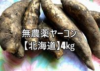 無農薬大きめヤーコン約5キロ【送料無料】