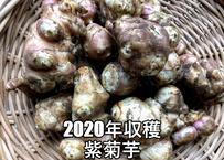 2020年秋収穫 紫菊芋 約1㎏