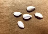 ポティマロンの種 【フランスの栗かぼちゃ】の種 5粒