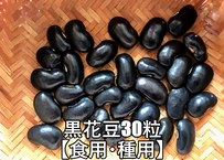 黒花豆の種 30粒 【北海道の在来品種】皮が薄くて繊細な花豆