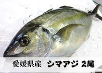 【愛媛県産シマアジ】朝活〆後即配可能な丸ごと2尾縞鯵『PRIDEFISH』