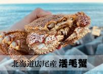 -20℃の船上から生きたまま直送!北海道広尾産濃厚毛ガニの味を知ってほしい2杯