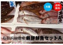 ≪コロナ影響≫【濃旨★鮮魚直送】島根随一漁港から朝獲盛り(約1~1.5kg)《IWJ01002》