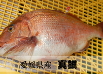 養殖真鯛のフィーレ ~真空パックですぐ調理可能~