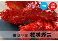 【10/6 12:00〆で復活!】特定の地域でしか獲れない幻のカニ<花咲ガニ>(約1.2kg)《WKJ01001》
