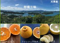 ふぁおの柑橘セット『柑橘三昧』(3種合計4.5kg)ご家庭向き