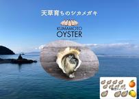 【試験販売】「クマモト・オイスター」天草有明海育ちのシカメガキ