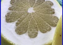 〈2月採り〉さっぱり黄色い芳香柑橘 天草の文旦「パール柑」(ご家庭向き:4kg)