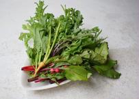 【駒沢/Komazawa Pick Up】千葉県 自然農園TOMのサラダセット Seasonal Salad set from Tom-san in Chiba prefecture